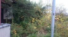 埼玉県川口市 草むしり屋(草むしり屋.com)~川口孫の手サービス~空き家管理