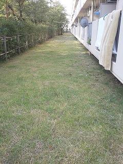 埼玉県川口市 草むしり屋 芝刈り1