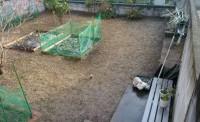 端から草を取り、畑の植物もすべて撤去来る事に