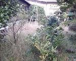 埼玉県川口市 草むしり屋 草刈事例6