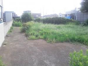埼玉県川口市 草むしり屋 抜根1