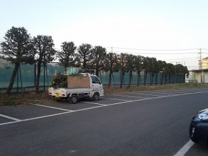 埼玉県川口市 剪定2(公共機関テニスコート)