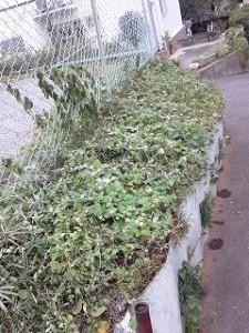 埼玉県川口市 草むしり屋 草刈7