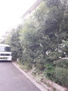 埼玉県川口市 草むしり屋 剪定5