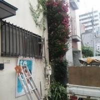 埼玉県川口市草むしり屋~川口孫の手サービス~庭木の伐採