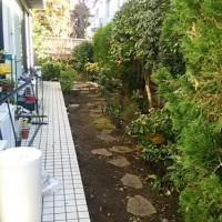 越谷市で草むしりと剪定