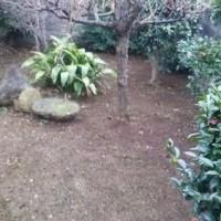 孫の手 草刈り 伐採110番 格安 見積