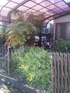 便利屋 空き家管理 庭木伐採 不用品処分