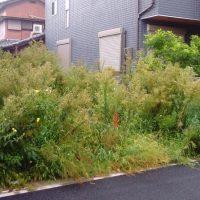 さいたま市 更地 空き家 草刈り