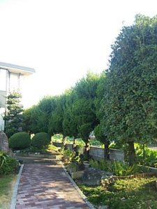 越谷市 春日部市 便利屋 庭木伐採 剪定
