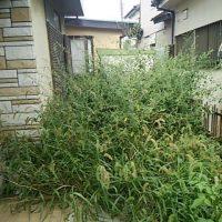 草むしり 空き家管理 不用品整理