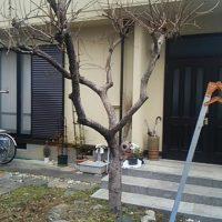便利屋 伐採 抜根 柿の木