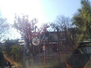 カイズカ 杉 ヒノキ 庭木 植木 伐採