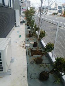 ハナミズキ 植木 植栽植込み