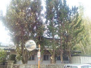 さいたま市 川口市 便利屋 庭木 高木伐採