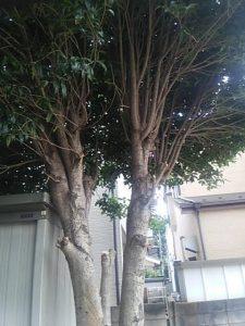 川口市 さいたま市 便利屋 庭木 植木 見積