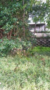 さいたま市 除草 草むしり 空き家 伐採 剪定 便利屋