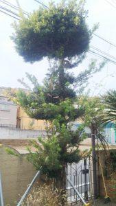 便利屋 剪定 伐採 植木 庭木 年末