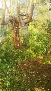 越谷市 川口市 格安 便利屋 草むしり 草刈り 除草