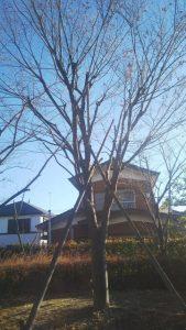 便利屋 格安 庭木 高木 伐採 剪定 八潮市