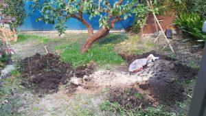 便利屋 格安 草むしり 伐採 抜根 剪定 施肥