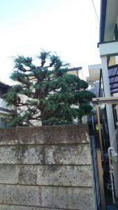 庭木 伐採 110番 孫の手 便利屋